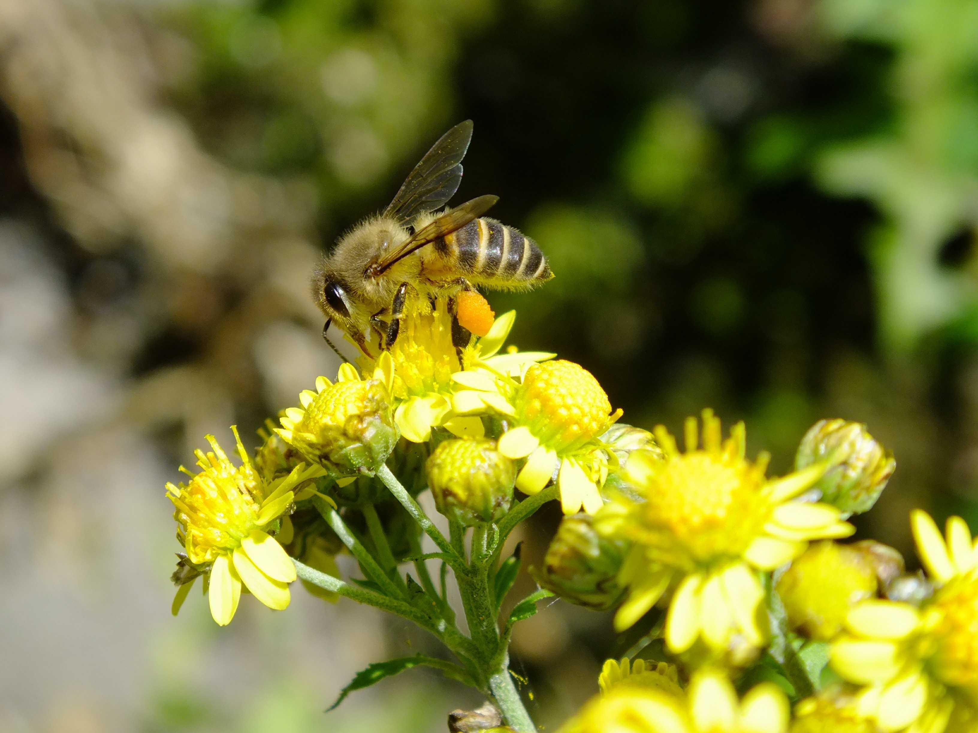 一只蜜蜂的今生来世